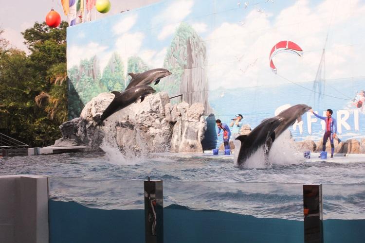 Một cảnh trong Dolphin Show ở Safari World tự đi Safari World