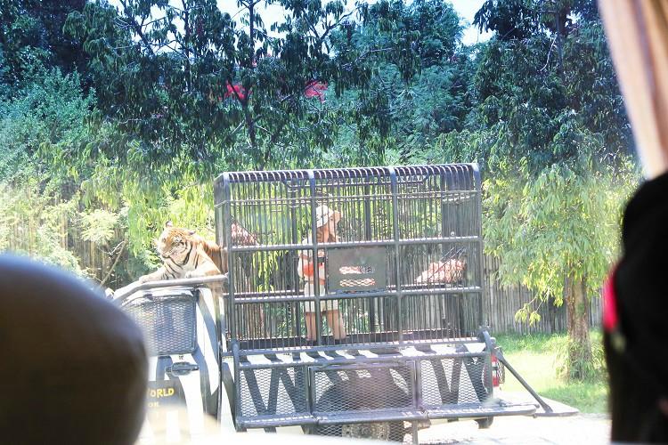 Feeding Show trong Safari World tự đi Safari World