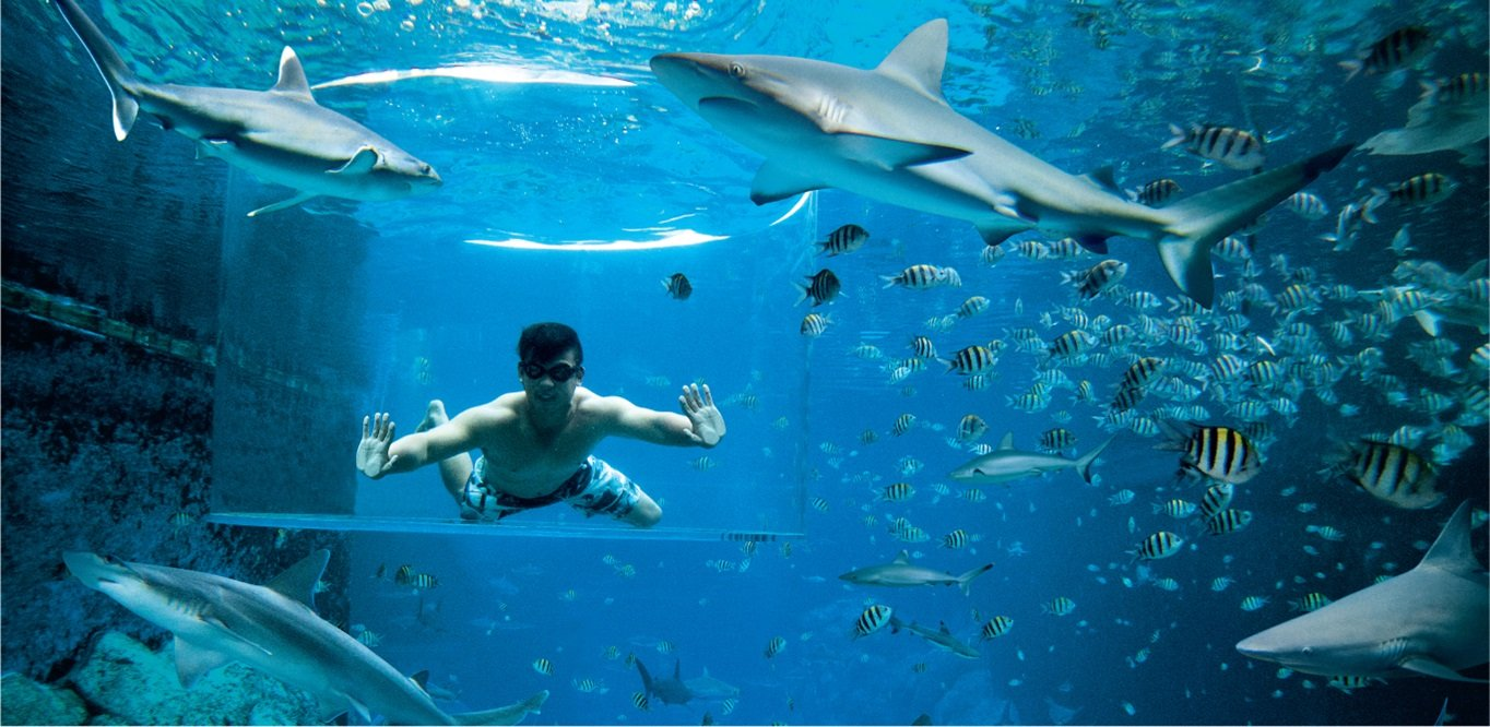 Lặn ngắm cá mập trong Thủy cung Singapore SEA Aquarium