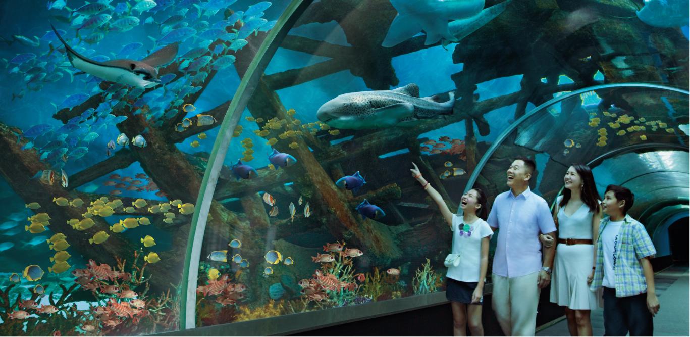 Ngắm cảnh đại dương bên trong Thủy cung SEA Aquarium